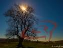 Amiaza la copac