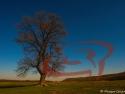 Copacul lui Dragos Grijincu