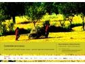 Arhiva de imagine Alexandru Tzigara-Samurcas - expozitie la MTR