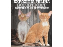 go west. Expozitia Felina Internationala SofistiCAT
