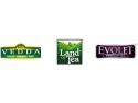 plante la ghiveci. Brand-ul  românesc Vedda va lansa peste 23 de produse noi toamna aceasta