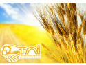 solutia business intelligence . Terra Agro Invest alege ERP si BI de la Senior Software