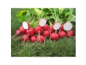 Pregatiti pentru toamna - seminte de legume de la NuOricum.ro! Baneasa Developments