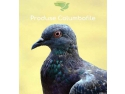 Produsecolumbofile.ro - produse pentru performanta porumbeilor campioni avantaje lansare Grupul Christian Tour