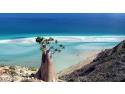 tni mai 2015.  Accesibil din ianurie 2015 si romanilor: Socotra, cel mai straniu loc de pe Pamant!