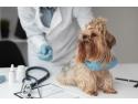 Un medic veterinar bun și servicii veterinare de înaltă calitate – unde le găsești Alex Petriceanu