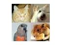 iubitori de cai. Ai un caine, o pisica, un papagal, un animal de casa? Acum pot deveni vedete!