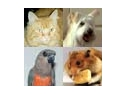 Ai un caine, o pisica, un papagal, un animal de casa? Acum pot deveni vedete!