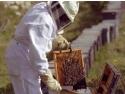 Crema cu venin de albine. Doneaza un stup sau un roi de albine pentru o familie saraca si ajuta-i sa isi dezvolte o ferma apicola