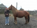 VEZI VIDEO – O familie saraca cu 13 copii a primit 2 vaci si un cal pentru dezvoltarea si intretinerea gospodariei