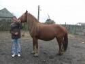 familie saraca. VEZI VIDEO – O familie saraca cu 13 copii a primit 2 vaci si un cal pentru dezvoltarea si intretinerea gospodariei