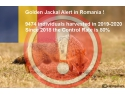 9474 de hilaci, o spece de inters comunitar, au cazut in bataia pustii in sezonul de vanatoare 2019-2020