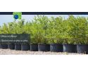 Afini - Natural Invest SRL
