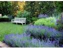brazi din conuri. MG Garden & More lansează site-ul www.gardenmore.ro