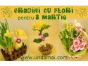 8 martie. Cadouri 8 martie - Gradini cu flori - Unda Mai