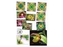 timbre. Frumusețea florilor rare pe timbre: orhidee sălbatice din România