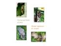 bufnita.  Frumusețea și expresivitatea păsărilor răpitoare de noapte pe mărcile poștale românești