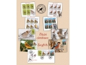 biologie. Marca poştală românească te invită în universul păsărilor cântătoare