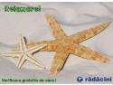 Verificare gratuita la service Radacini
