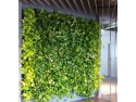 plante medicinale. Gradina verticala executata de verdelabirou in Bucuresti.