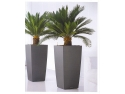 textile decorative. plante-decorative-birou