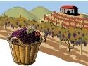 biblioteca vie. Team building la vie: Povestea vinului