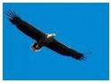 excursie cazanele dunarii. Din nou in Delta Dunarii cu Mihai Moiceanu! Fototur - calendar 2009