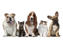 comanda mancare online Iasi www flamanzila ro. animale
