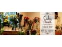 floraria mobila. Flori pentru toate ocaziile, la floraria online City Flowers
