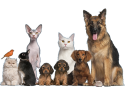 cabinet homeopatie. cabinet veterinar bucuresti