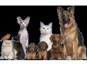 cabinet veterinar bucuresti