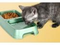 expozitie pisici. Hrana si vitamine pentru pisici