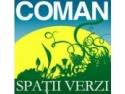 amenajari spatii verzi. Intretinere spatii verzi, floare la ureche in Timisoara prin compania Coman Spatii Verzi