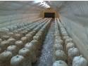 Pheonix Spor Construct, producator de solarii pentru legume si ciuperci
