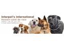 Vanzare caini de rasa – alege animalul tau de companie de la Interpet's International!