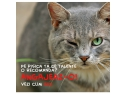 hrana pisici. Peste 250 de pisici isi doresc un post de  director de comunicare la Catbox.ro