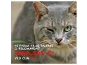 nastere. Peste 250 de pisici isi doresc un post de  director de comunicare la Catbox.ro