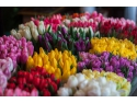 5 motive sa cumperi flori pentru cineva de la o florarie online acado