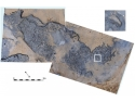 vinuri vechi. Descoperiri recente – urme de pasi vechi de peste 800 000 de ani