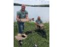 aventuri la pescuit. pescuit la crap pe balta pescarului