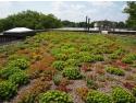 Sisteme acoperis verde extensiv Odu