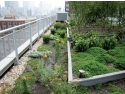 montare wc. acoperis verde pret avantajos - odu green roof
