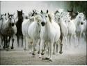 asistata. Experimenteaza si tu diferenta intre teorie si practica, participa la Horse Enabled Learning Program