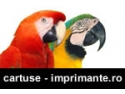cartuse, consumabile, imprimante