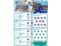 startup. infografic SEC2SV 2016