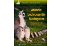 prescolari. Intalnire cu Dodi si Roni: animale buclucase din Madagascar