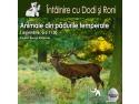terapie asistata de animale. Întâlnire cu Dodi și Roni: Animale din pădurile temperate