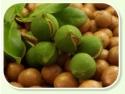 anti-aging. Nuca de macadamia