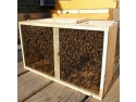 Apis Donau propune apicultorilor metoda ideala de achizitionare a roiurilor