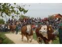 Parada Taurilor Semtest-BVN 2014